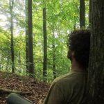 taal-van-het-woud